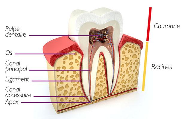 Endodontie Chambéry